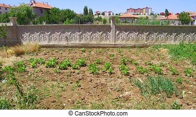 orgánico, ciudad, horticultura, ciudad, pasatiempo, jardín, ...