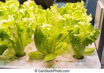 orgánico, hydroponic, vegetal, crecer, con, fue adelante, luz, interior, granja, tecnología
