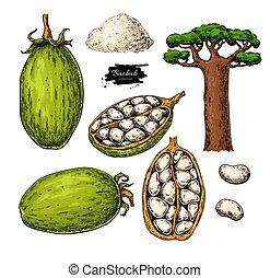 orgánico, sketch., superfood, baobab, drawing., vector, alimento, sano