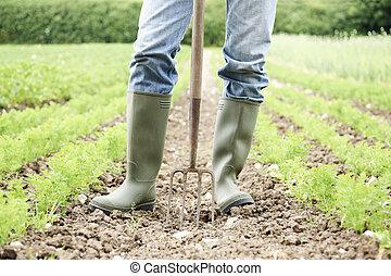 orgánico, trabajando, granja, arriba, campo, granjero, cierre
