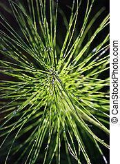 orgânica, capim, closeup, sunlit
