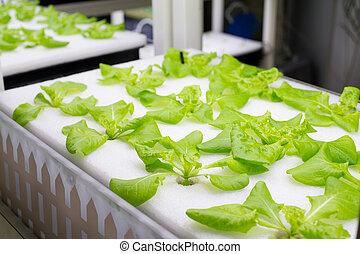 orgânica, hydroponic, fazenda, cultivo, vegetal, tramas