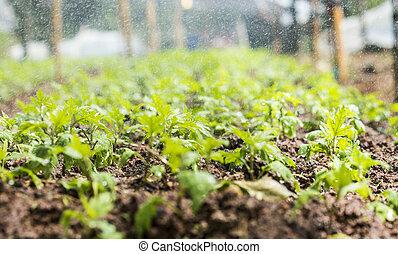 orgânica, jardim, cima, imagem, com, água, spring.