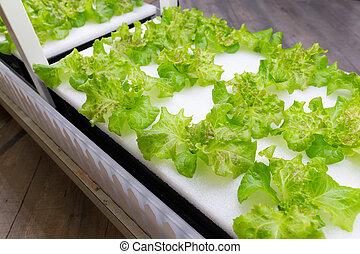 orgânica, jardim, hydroponic, fazenda, vegetal, abertos