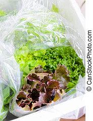 orgânica, legumes