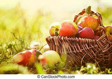 orgânica, maçãs, em, verão, capim