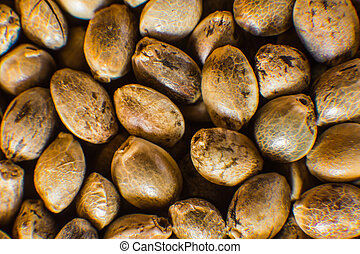 orgânica, macro, seeds., topo, macro., detalhe, seed., marijuana, cannabis, sementes, fundo, muitos, vista., cânhamo