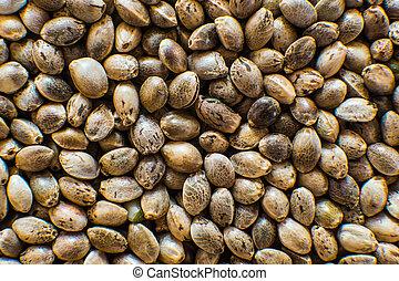 orgânica, macro, seeds., topo, macro., marijuana, seed., detalhe, cannabis, sementes, fundo, muitos, vista., cânhamo