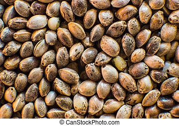 orgânica, macro, topo, macro., detalhe, seed., marijuana, cannabis, sementes, cânhamo, fundo, muitos, vista., seeds.