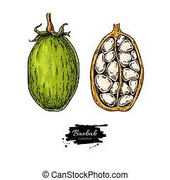 orgânica, sketch., superfood, baobab, drawing., vetorial, alimento, saudável
