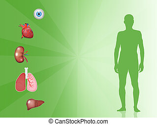 Organ donor - illustration of organ donor