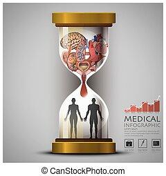 organ, medicinsk, infographic, hälsa, mänsklig, timglas