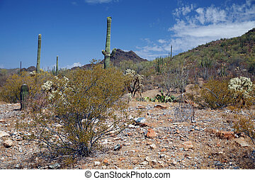 Organ Pipe National Monument, Arizona, USA