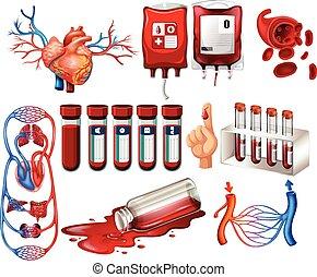 organe, blut, menschliche