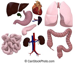 organes, diagramme