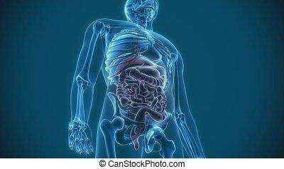 organes, douleur
