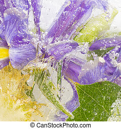 Organic abstraction background with flowers of bright irises, decorative cabbage and green leaves with stripes and air bubbles.