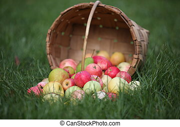 apples and pears in basket in summer grass