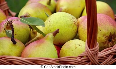 Organic apples and pears