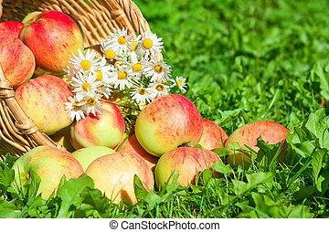 apples in a garden on a green grass