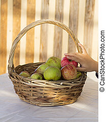 Organic apples in basket in summer grass.