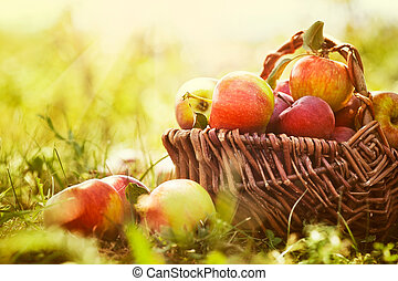 Organic apples in summer grass - Organic apples in basket in...
