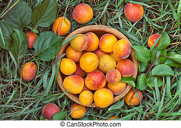 Organic apricots in a wooden bowl