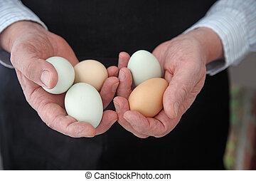 Organic Araucana eggs