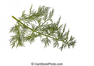 organic baby dill closeup details isolated on white background