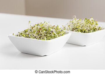 Organic Broccoli Sprouts in Bowls