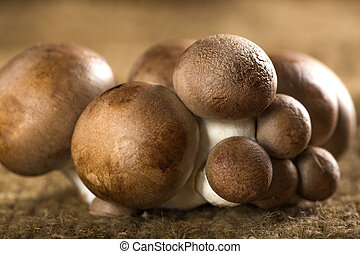 Brown Baby Bella Mushrooms