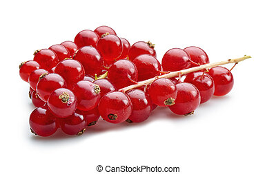 Organic bunch of red currants isolated on white