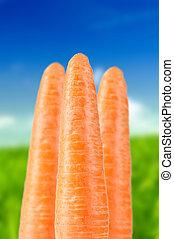 Organic Carrots on Summer Background