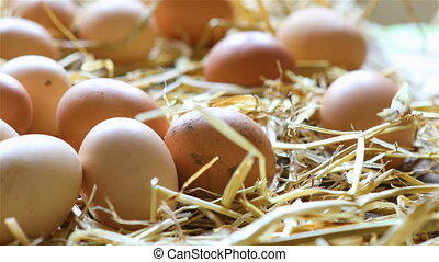 Organic chicken eggs in the hay