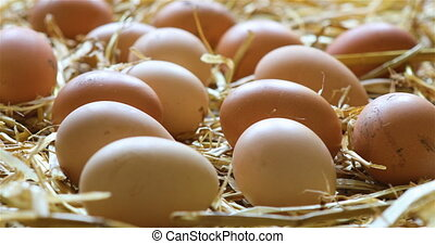 Organic chicken eggs in the hay - dolly shot