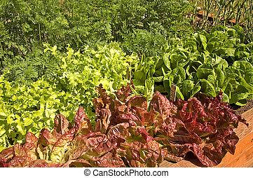 Organic Container Garden of Lettuce