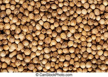 Organic Dried coriander seeds Coriandrum sativum closeup...