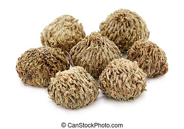 Organic dry White Akarkara Seeds.