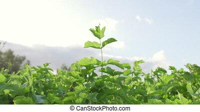 Organic farm - Growing organic produce in an organic ...