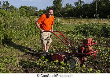 Organic farmer tilling between garden rows.