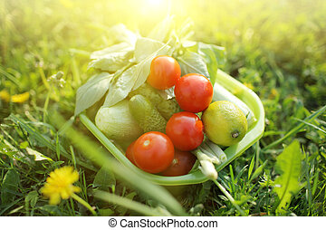 Bowl of fresh organic home grown vegetables on green grass