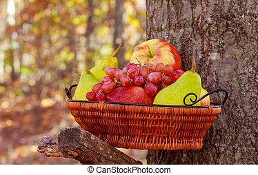 Organic fruit in basket in summer grass. Fresh grapes, pears and apples in nature