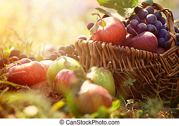 Organic fruit in summer grass - Organic fruit in basket in ...