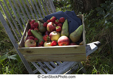 Organic fruit in wooden crate. In orchard during autumn harvest