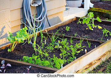 Organic Gardening - Organic garden beds with nice soil in...