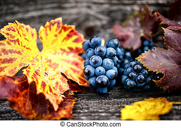 Organic grapes with leaves as static background, still life,...