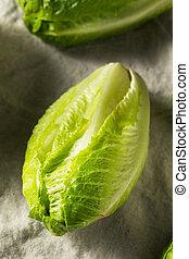 Organic Healthy Green Romaine Lettuce