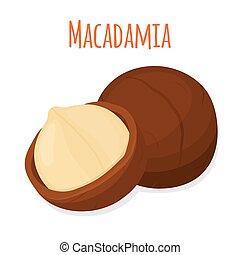 Organic macadamia, nutrition nut, oil ingredient. Flat style. Vector illustration