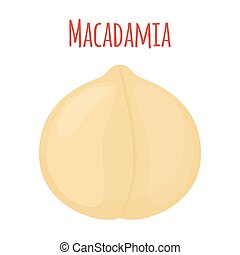 Organic macadamia, nutrition nut, oil ingredient. Flat style. Vector illustration