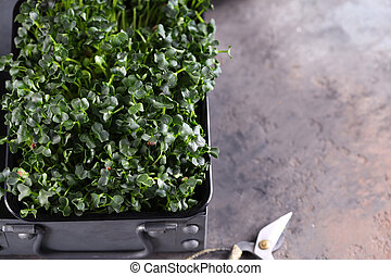 organic microgreens for a healthy diet